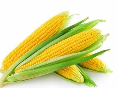 怎么煮玉米好吃 煮玉米什么时候放糖