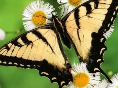 幼儿园大班说课稿 ¡¶美丽的蝴蝶¡·说课稿