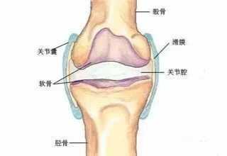 膝关节响 运动常见损伤之膝关节弹响