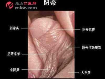 女性生殖器官真人图片 成熟女性阴蒂勃起时的阴核实图照片