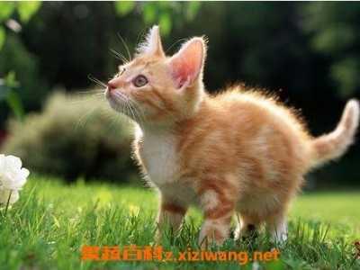 猫肉的功效 猫肉的营养价值与功效与作用